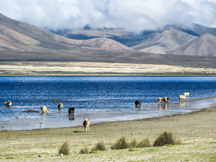 inca-trail-traija-laguna-grande