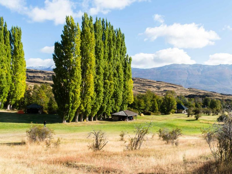 Cypress trees in Los West Winds campground in Parque Nacional Patagonia and a good place to stop on a two week Patagonia itinerary along the Carretera Austral