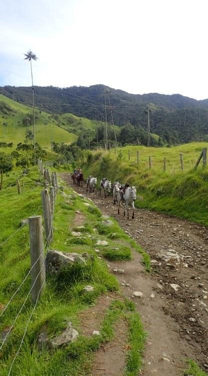 A local with his horses in Parque Nacional Los Nevados, Colombia