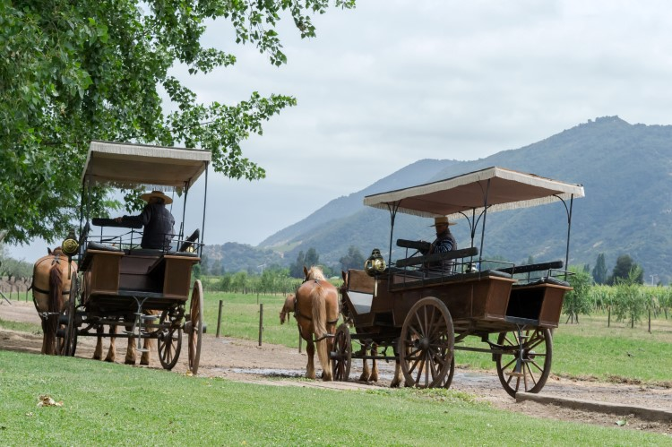 A horse-drawn carriage at Viu Manent, a vineyard in the Colchagua Valley, Chile.