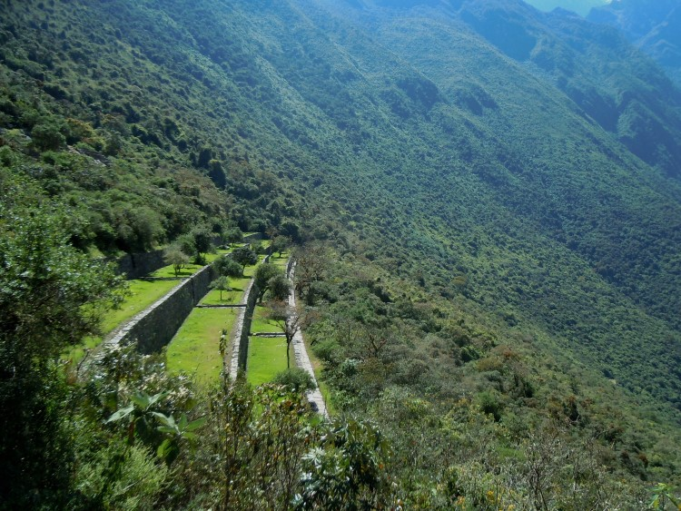 More terraces, barely extracted from the encroaching jungle at Choquequirao, Peru.