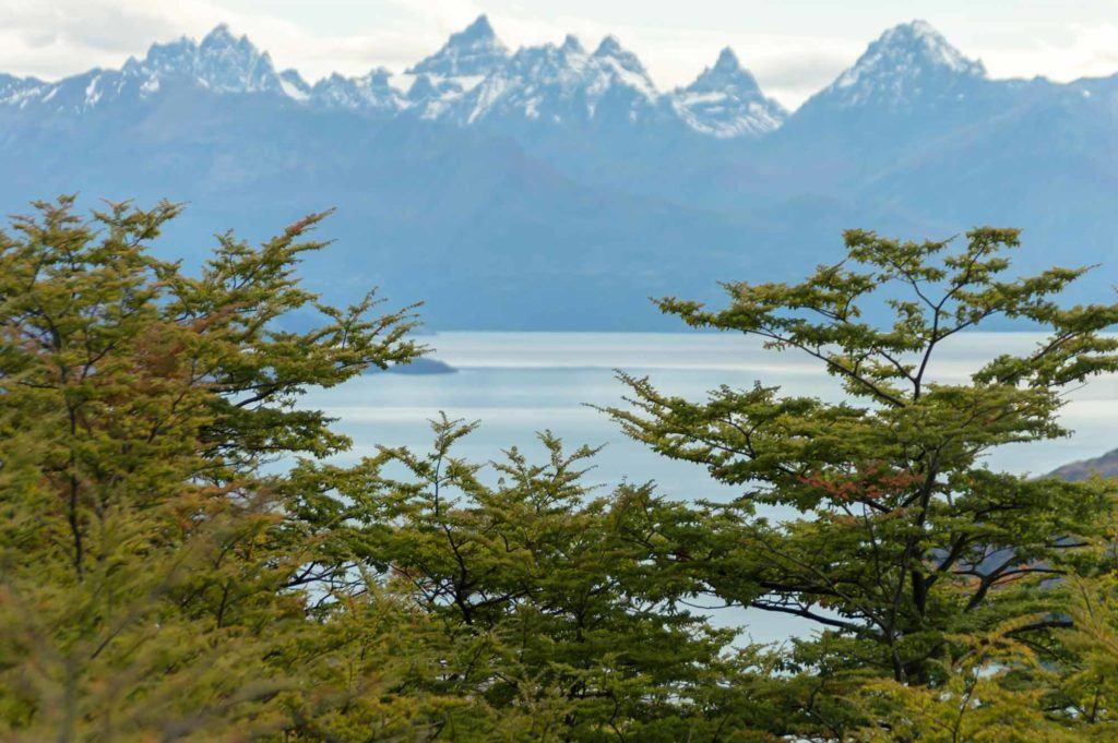 A view of Lago General Carrera through trees, taken along Patagonia's Carretera Austral