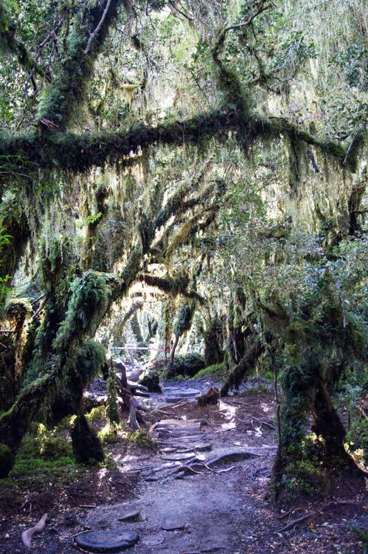 Dense temperate rainforest in Queulat National Park near Puyuhuapi along the Carretera Austral