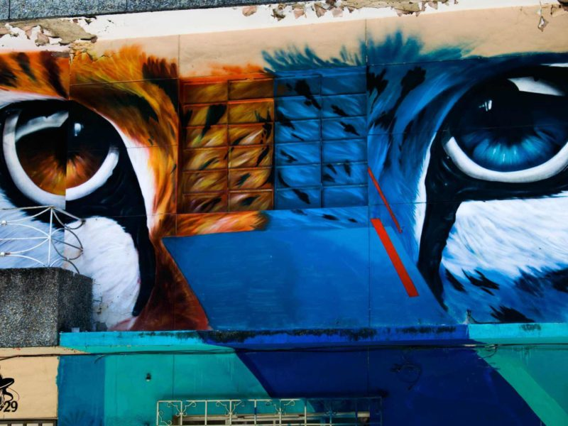 Cat-themed street art in Medellin Colombia.