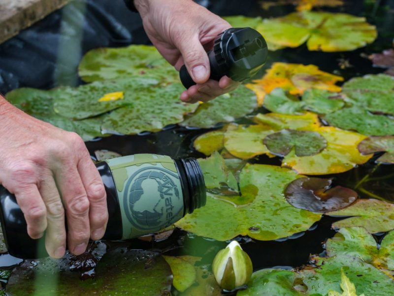 Someone uses a Water-to-Go travel water filter to scoop water from a pond filled with waterlillies