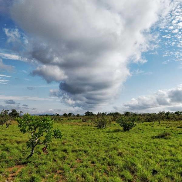 Grasslands in the Rupununi in Guyana, South America