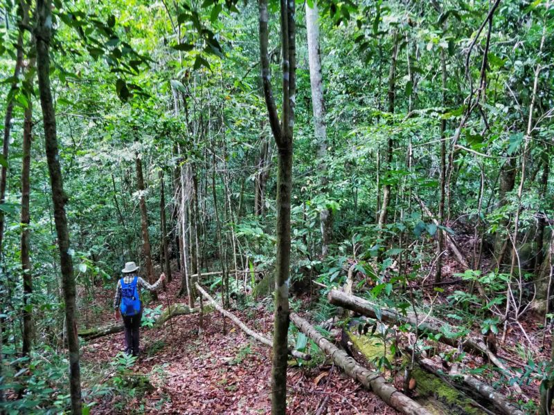 A person walking through the rainforest in Guyana, South America