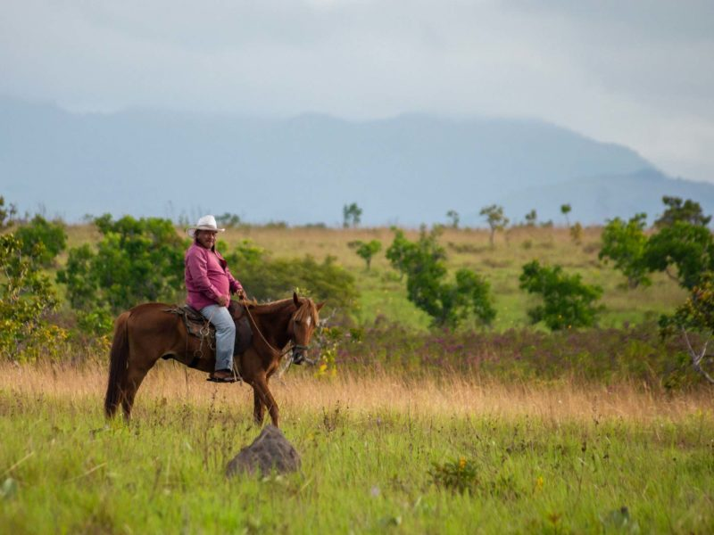 Ride with this cowboy on a chestnut horse in the grasslands of Guyana.