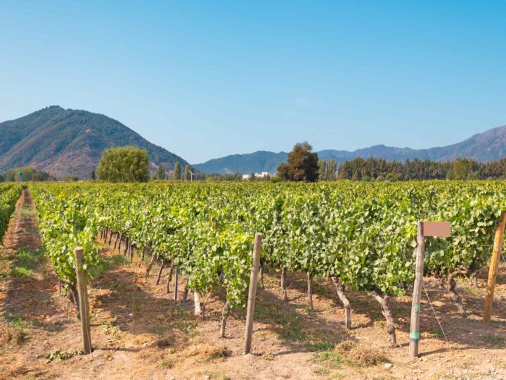 Vineyards in Colchagua, Chile and one of the best places to visit in South America for wine tourism